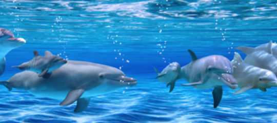 Rencontrer les dauphins au Marinland